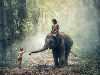 elephant-1822481_1920