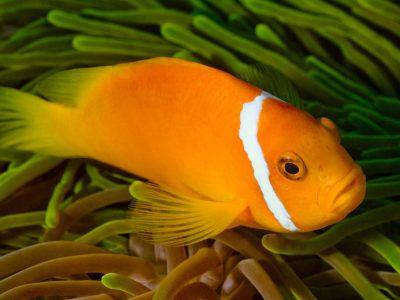 fish-2141022_1920